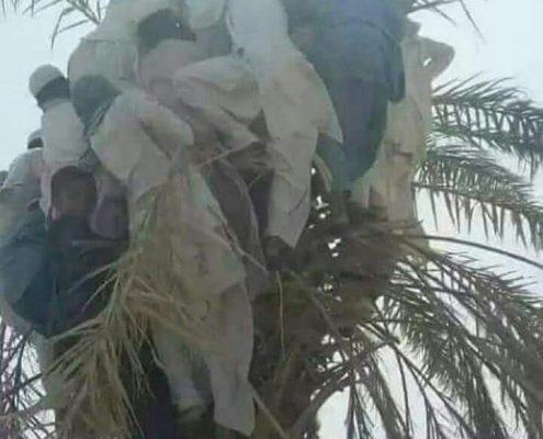 پناه بردن مردم سیستان و بلوچستان به درخت در سیل این استان